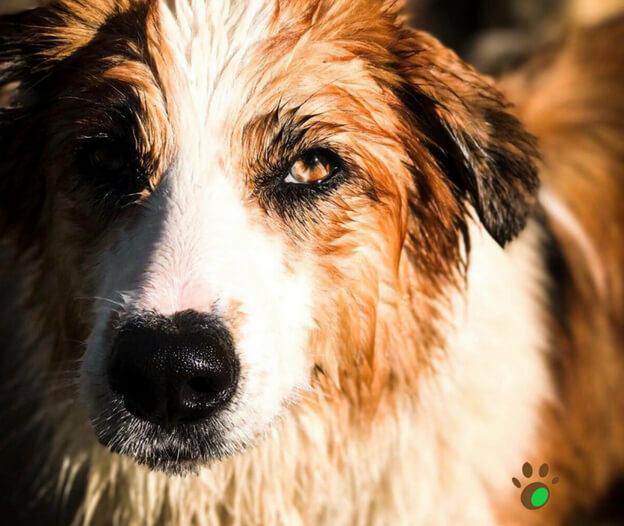 Scegliere il giusto cane: sbaglia il primo passo e sarai nelle grane tutta la vita.