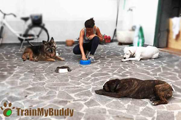 daniela e rito del cibo con i cani