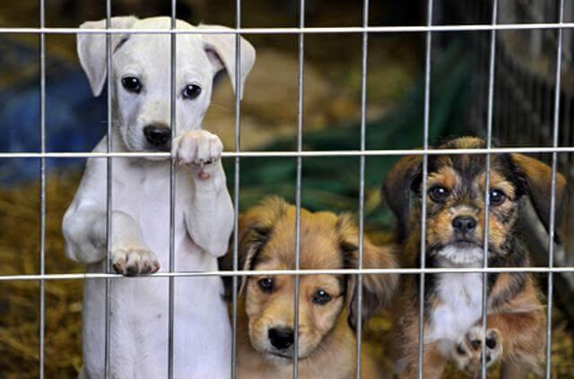 cuccioli al canile