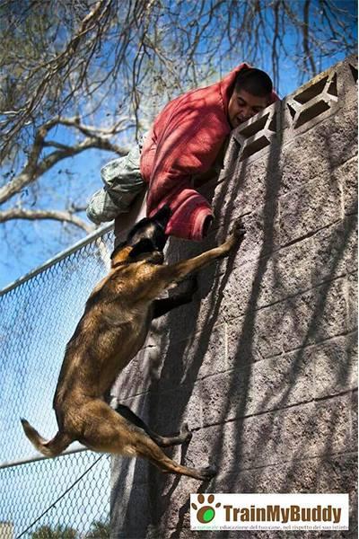 allenamento attacco cane