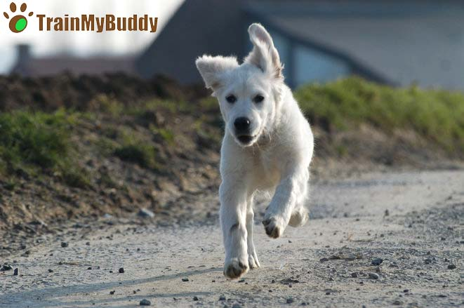 Fuori di casa in 5 secondi! Ecco i motivi per i quali il tuo cane scappa di casa non appena apri la porta!
