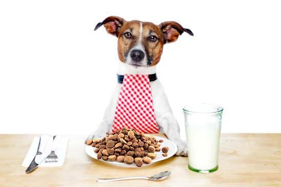 Le migliori crocchette per cani: come leggere le etichette e scoprire gli ingredienti pericolosi