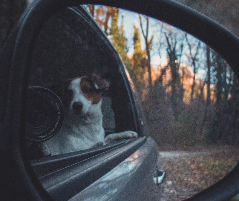 8 passi per insegnare al tuo cane a non soffrire la macchina.