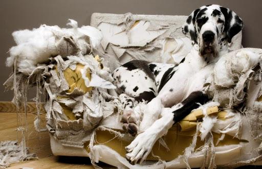 cane distrugge divani